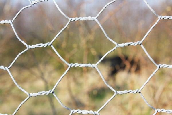 poultry farm netting