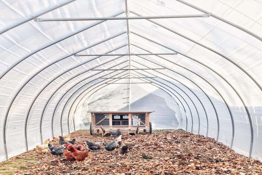 greenhouse chicken coop